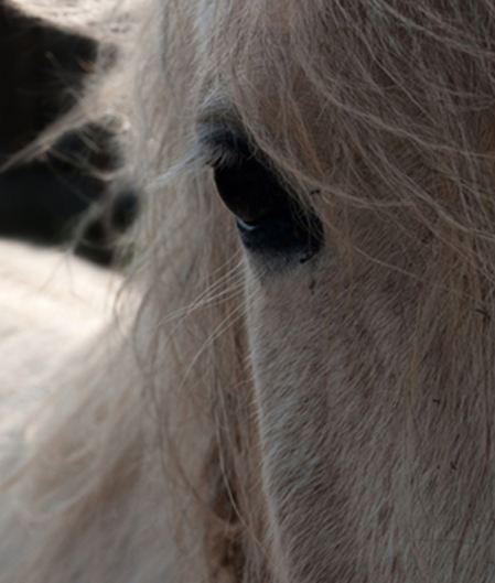 horse head2