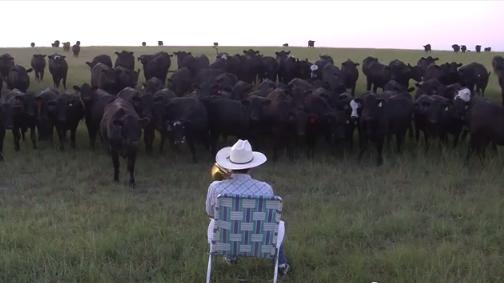 cows trombone deckchair