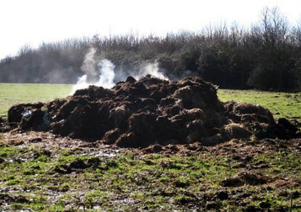 steaming pile
